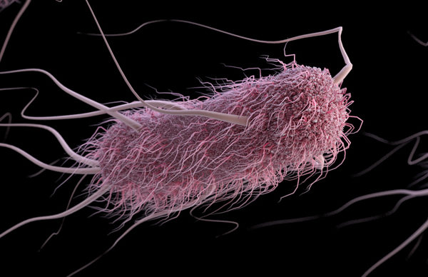 Central Kentucky hit with mysterious E. coli outbreak