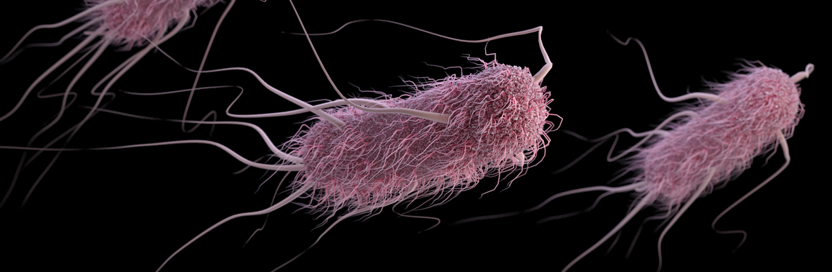 Marine E. Coli Outbreak Puts 69 Recruits in San Diego-area Hospitals