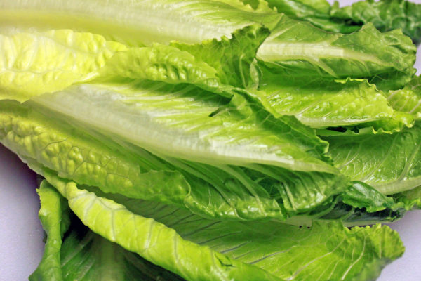 E. coli-tainted romaine lettuce