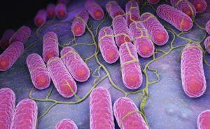Foodborne diseases: Salmonella