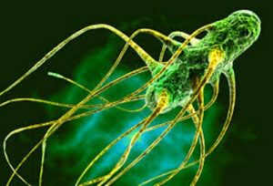 foodborne pathogen Salmonella