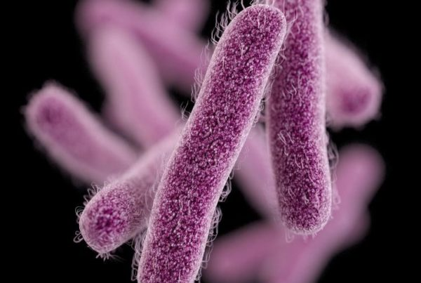 Seattle shigellosis outbreak