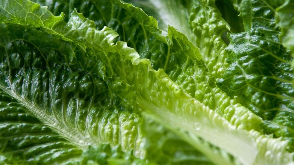 Yuma romaine keeps making people sick; outbreak grows again