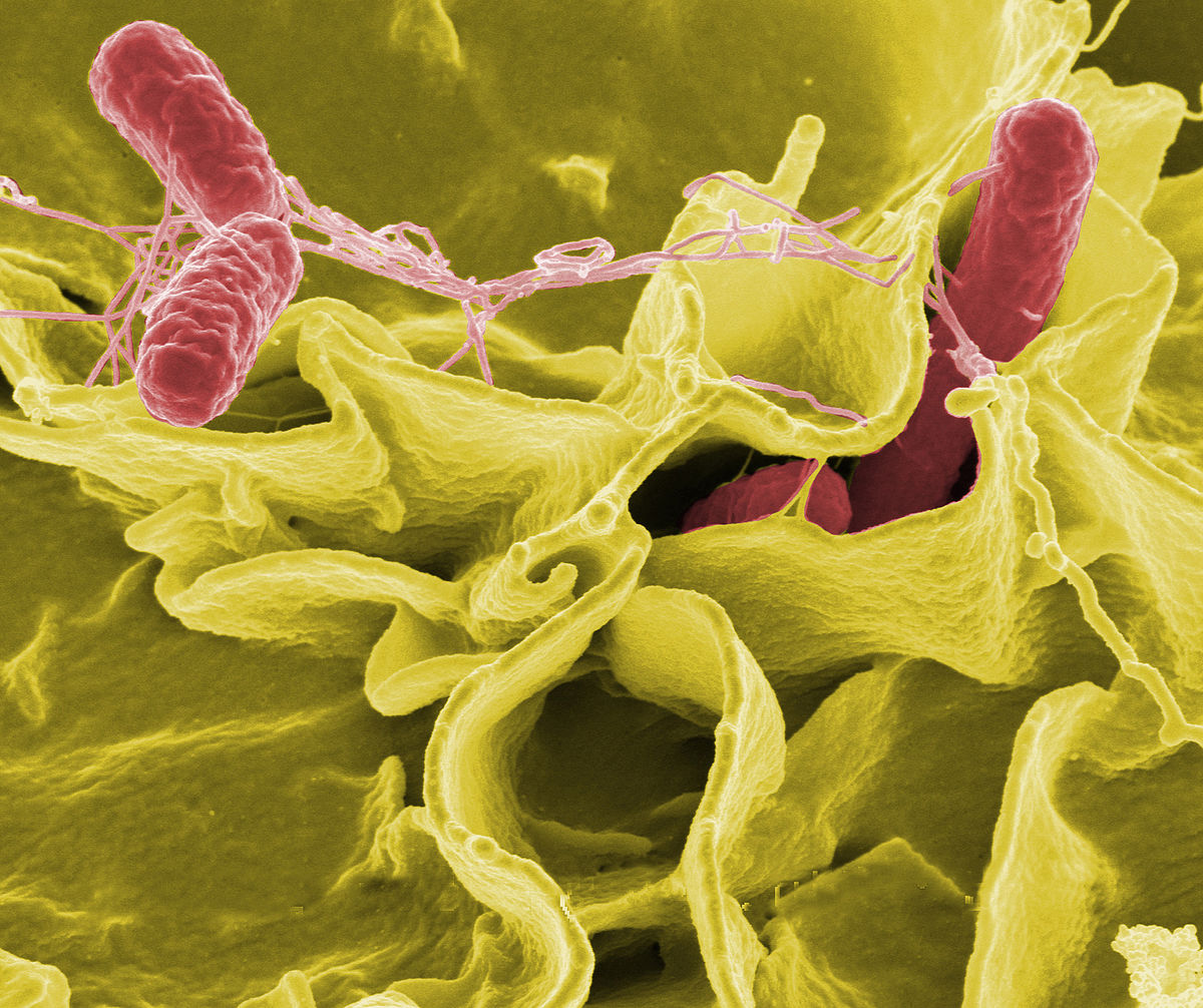 Missouri Salmonella outbreak grows to 32 ill